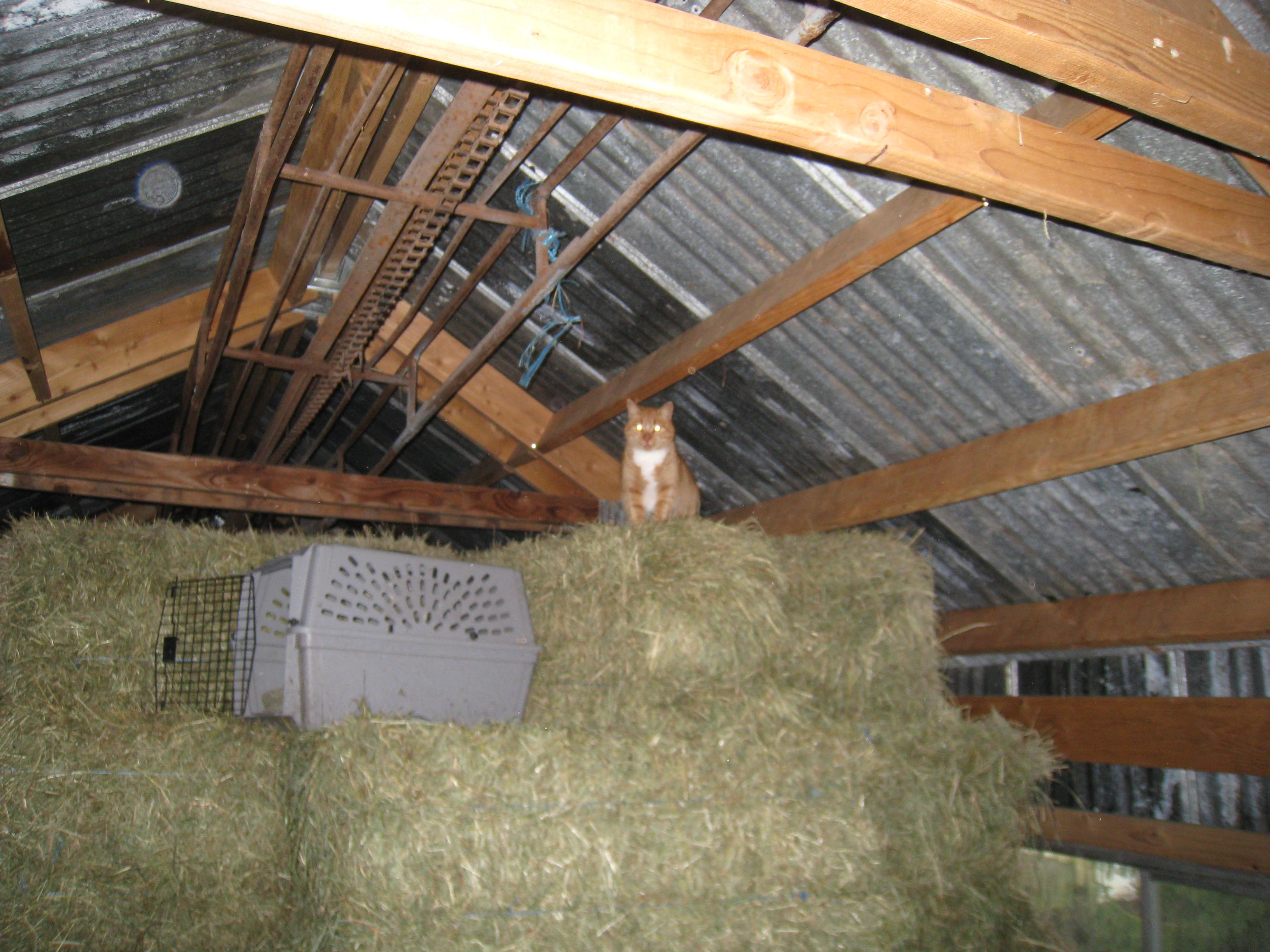 Views from the Hay Loft   Schoonover Farm Blog