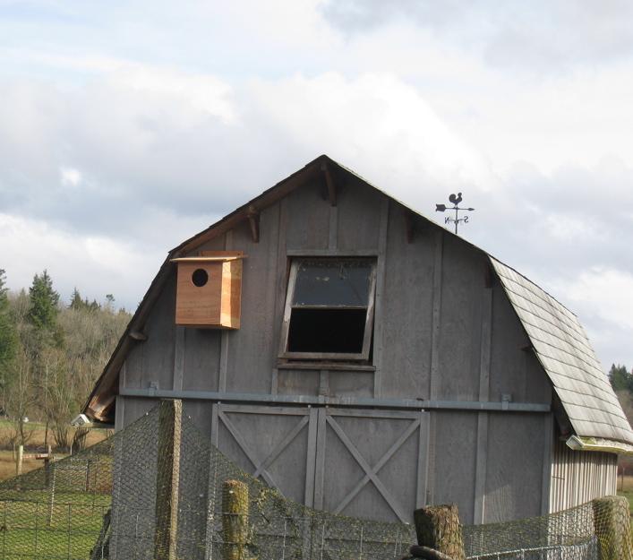 Session 1 Pack Goat Training | Schoonover Farm Blog