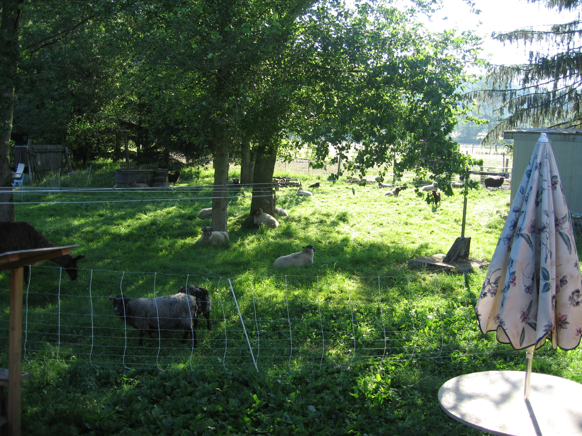 the day the trees came down schoonover farm blog