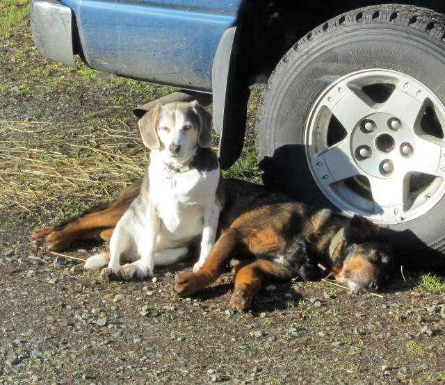 sunny dogs