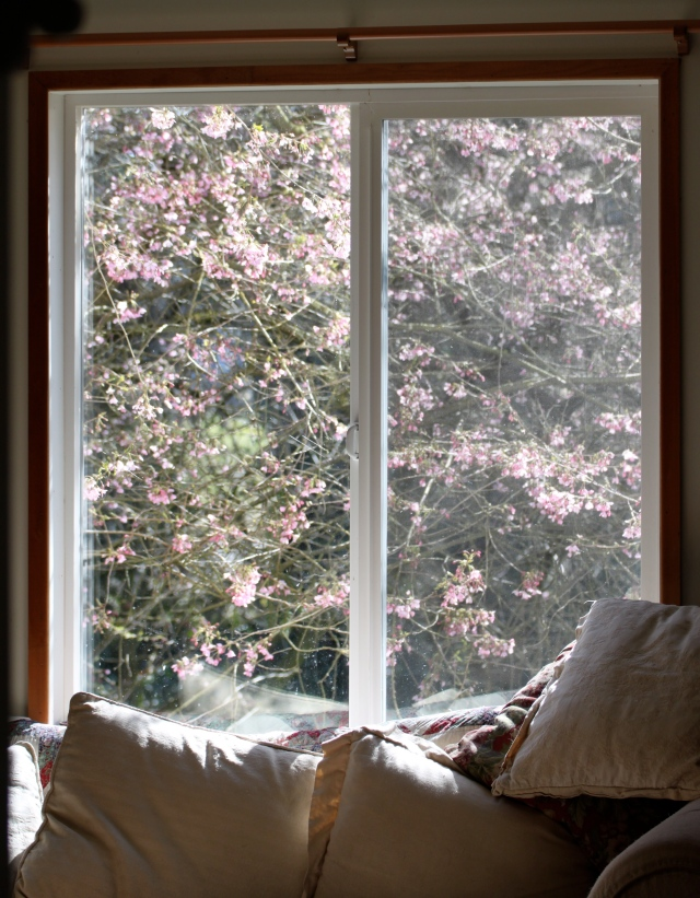 window and blossoms