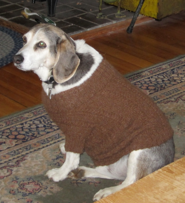 rocky and sweater