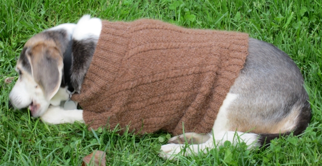 rocky outside with sweater
