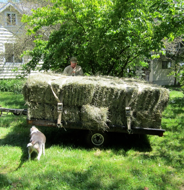 small load of hay