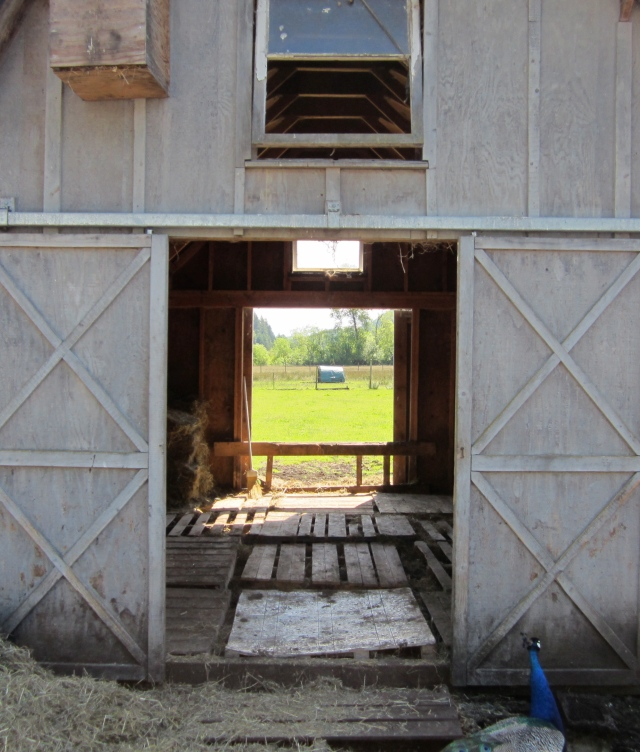Through the hay barn
