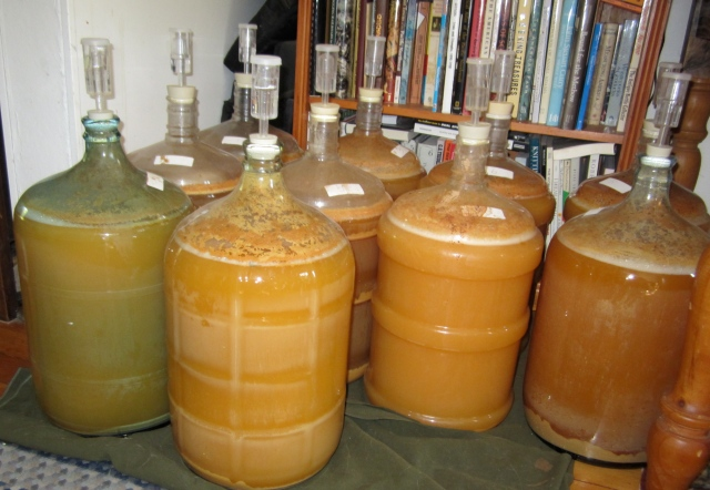 10 carboys cider
