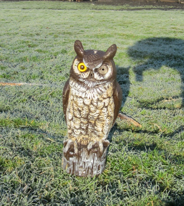 owl missing eye