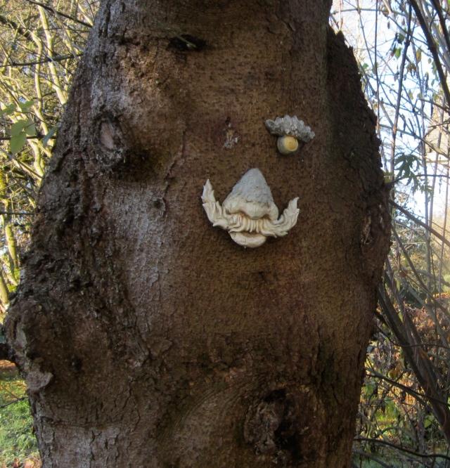 tree missing eye