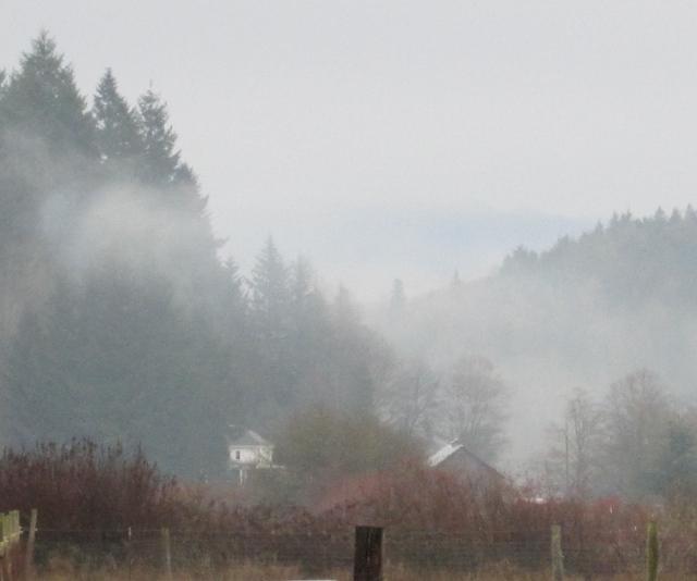 foggy neighbors