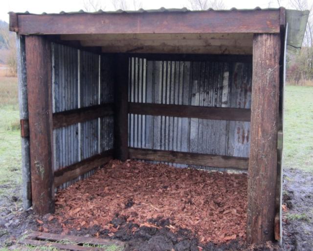 new pig shelter