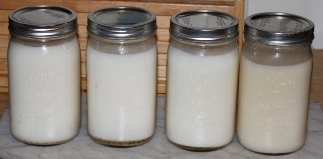 lard in jars