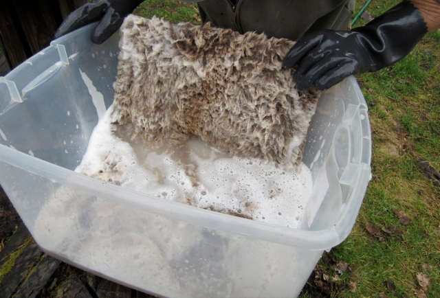 degreasing sheepskin