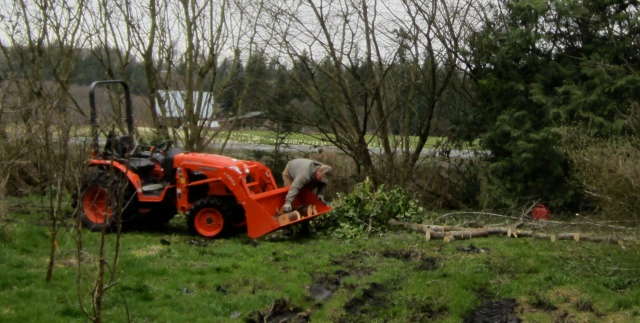 new tractor and treework Tom