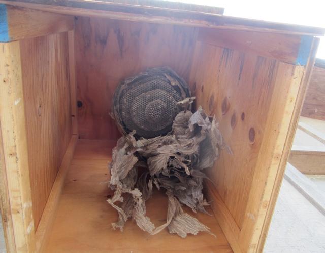 owl nest box hornet nest