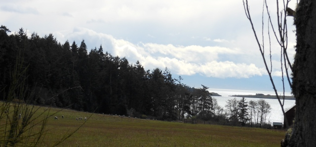 sheep with nice view