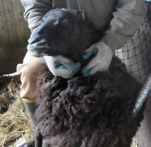 tanya in sheep chair