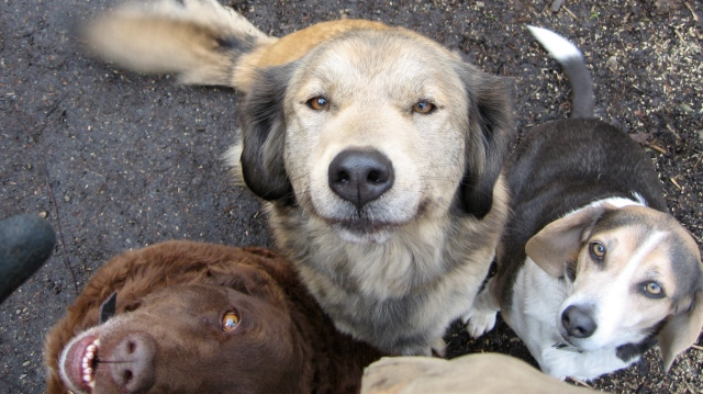3dogfaces