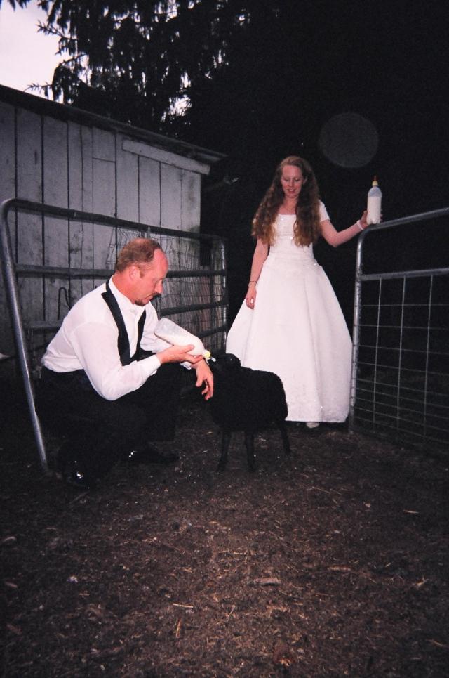 wedding bottle lamb