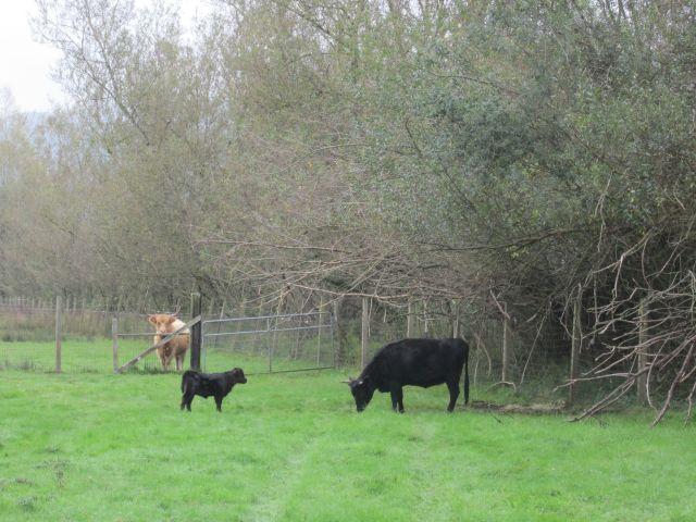 calf greeting sister Marji