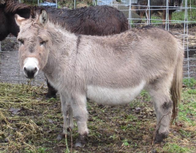 grumpy donkey