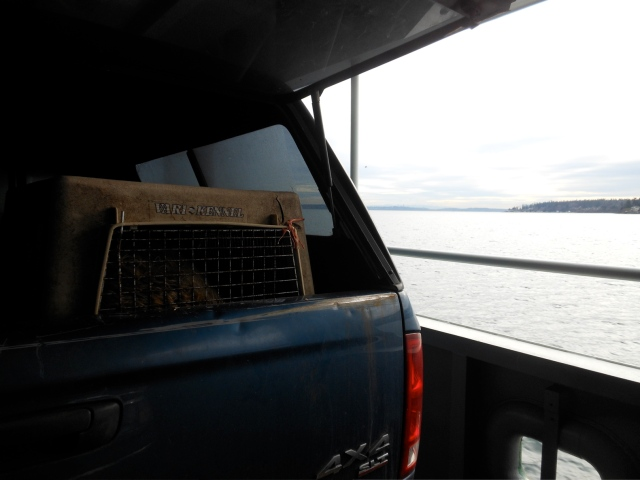 kennel on ferry