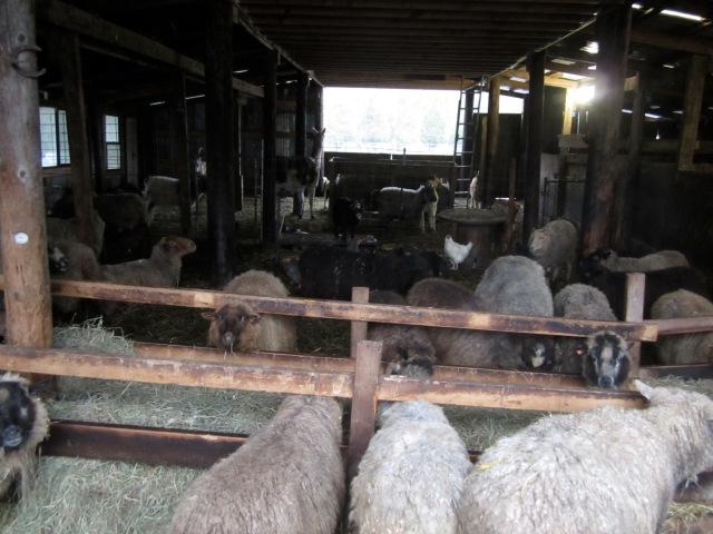 crowded barn