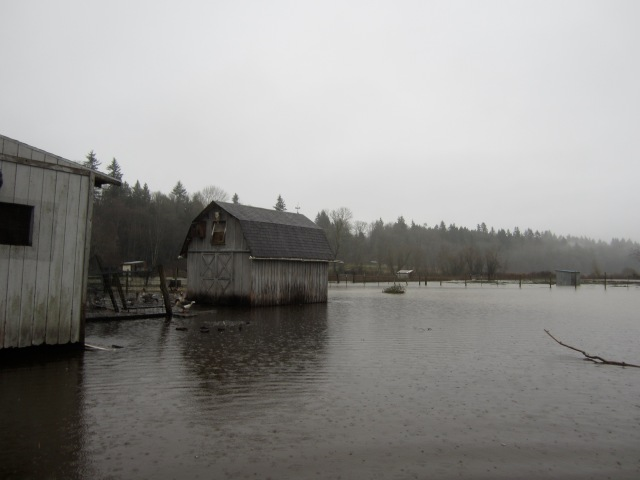 flooded haybarn 2