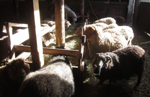 Future fleeces in the sun