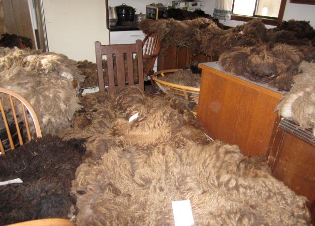 drying fleeces