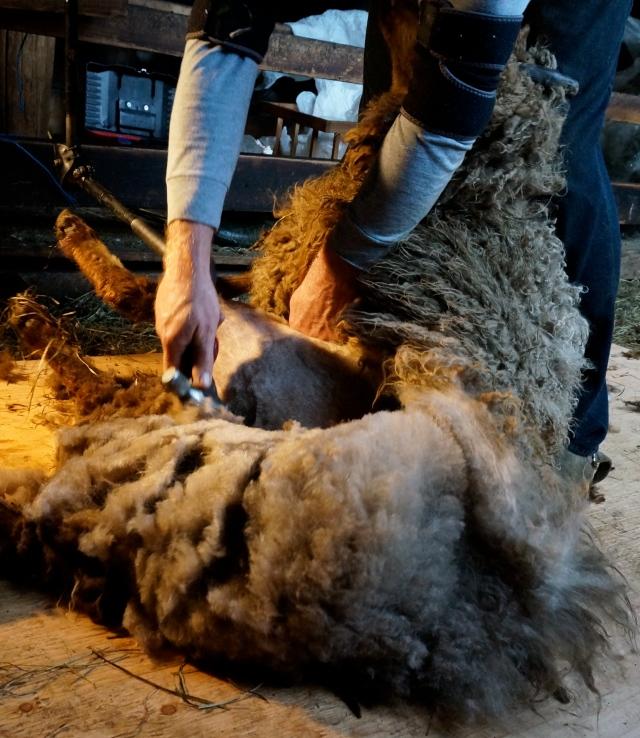 shearing Huey