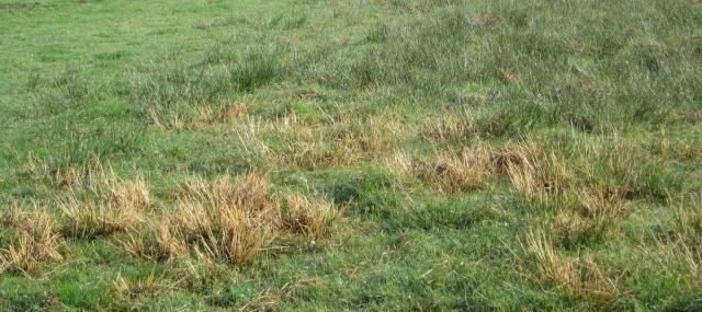 burnt swamp grass