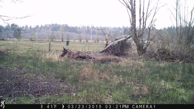 bird on game camera