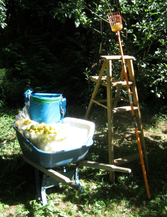fruit equipment