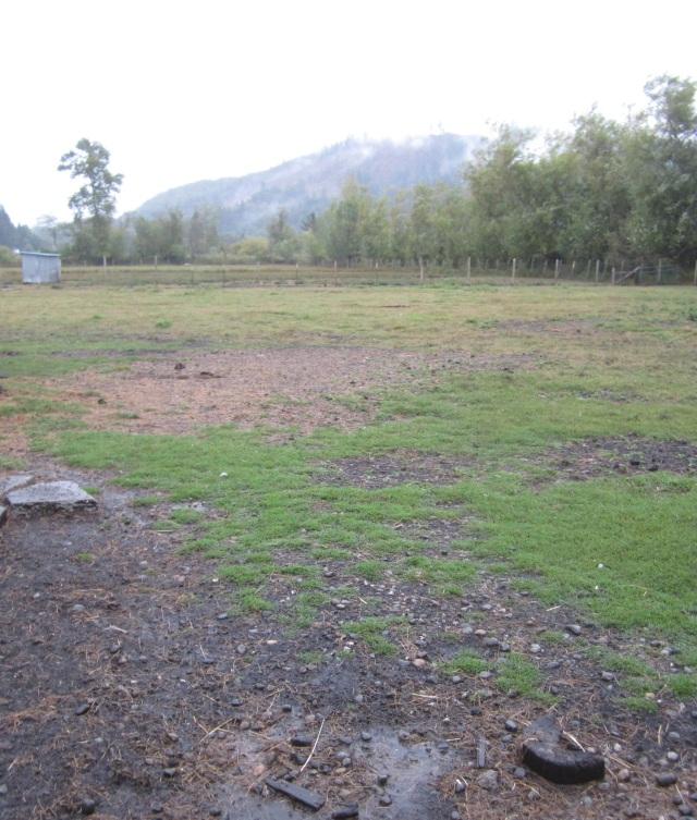 wet pasture