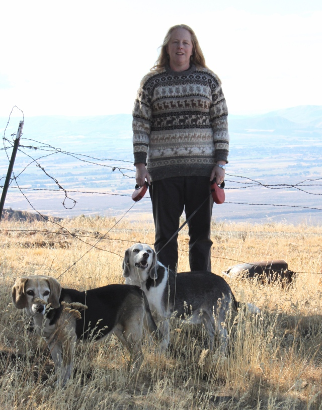 beagles and sweater in shade