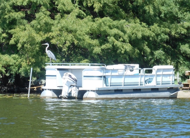 GBH on pontoon boat