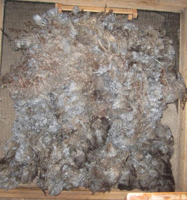 Wynette fleece