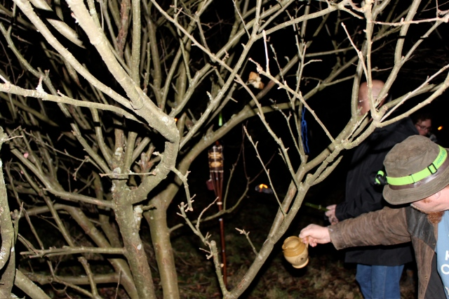 pouring cider on roots with toast in tree