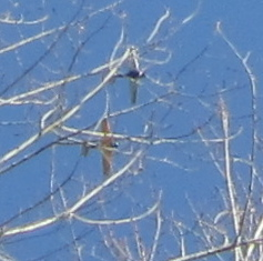 planes in cottonwood branches