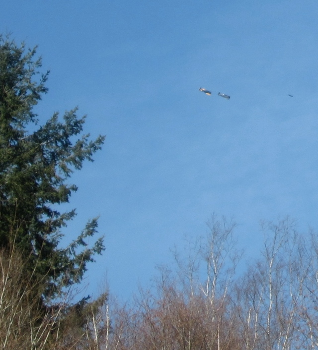 planes over trees