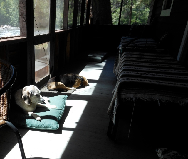 Beagles on front porch