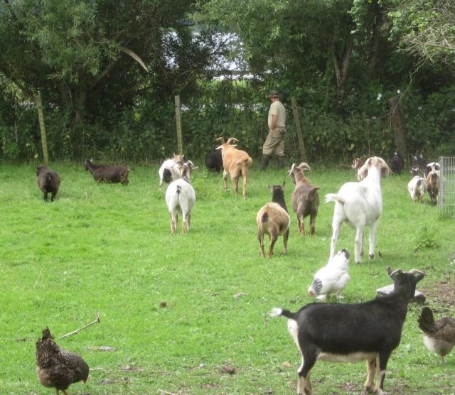 Tom and his entourage