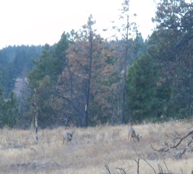 bucks standing