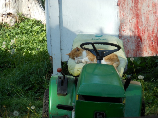duke sleeping on lawn mower at home