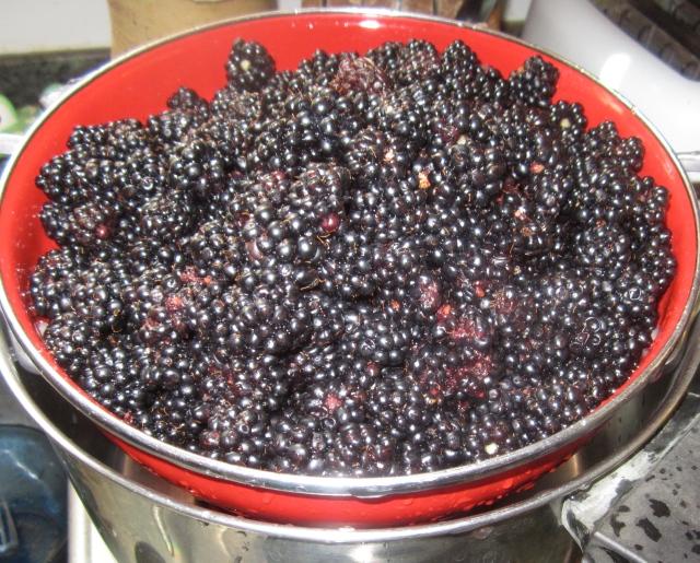 half of the blackberries