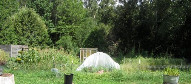 needy garden