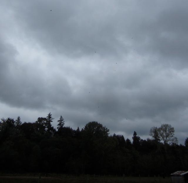overhead vultures