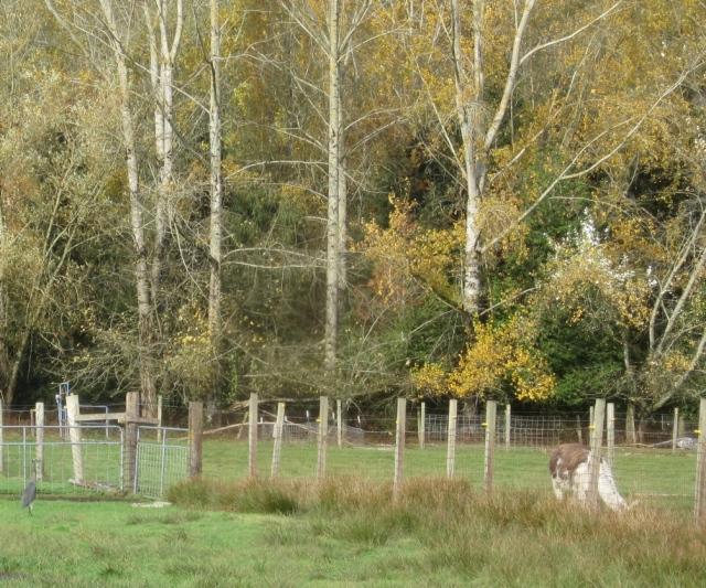 heron-and-llama