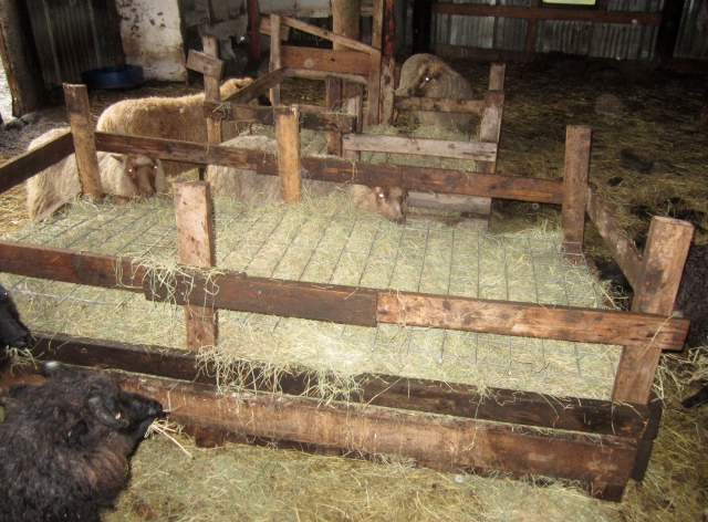side-feeders-with-hay