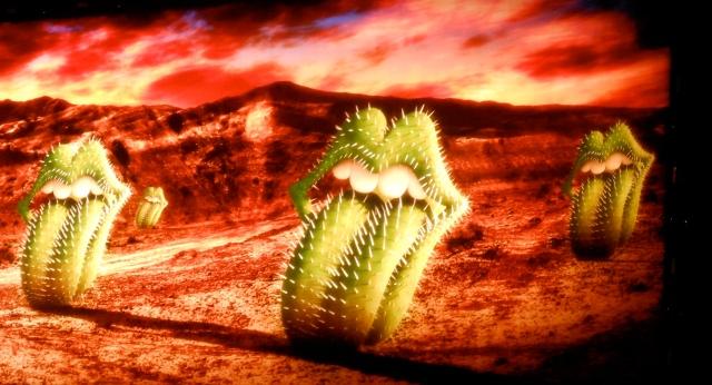stones-cacti